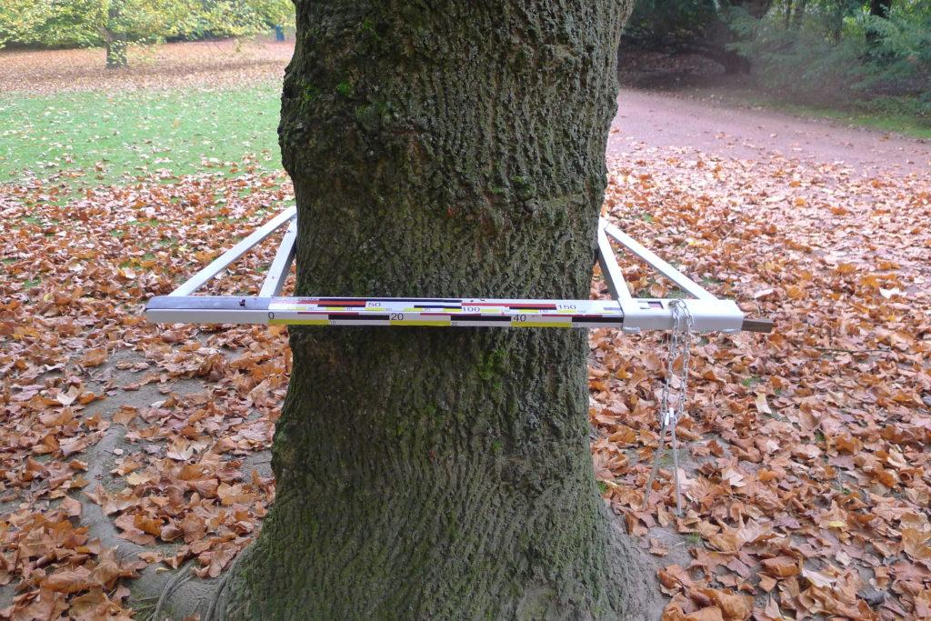 Pierre Courtois - Au fur et à mesure . Compas forestiers- Espace Européen pour la Sculpture asbl, Parc Tournay-Solvay -Bruxelles 2012